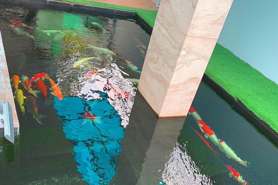 Chống thấm hồ cá bằng sơn PU gốc nước Neomax 826