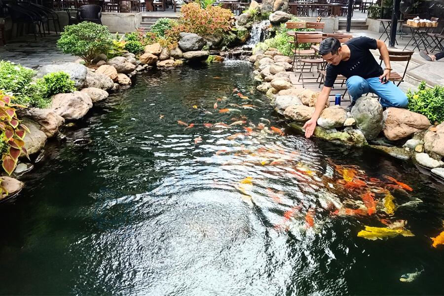 Phụ gia chống thấm hồ cá